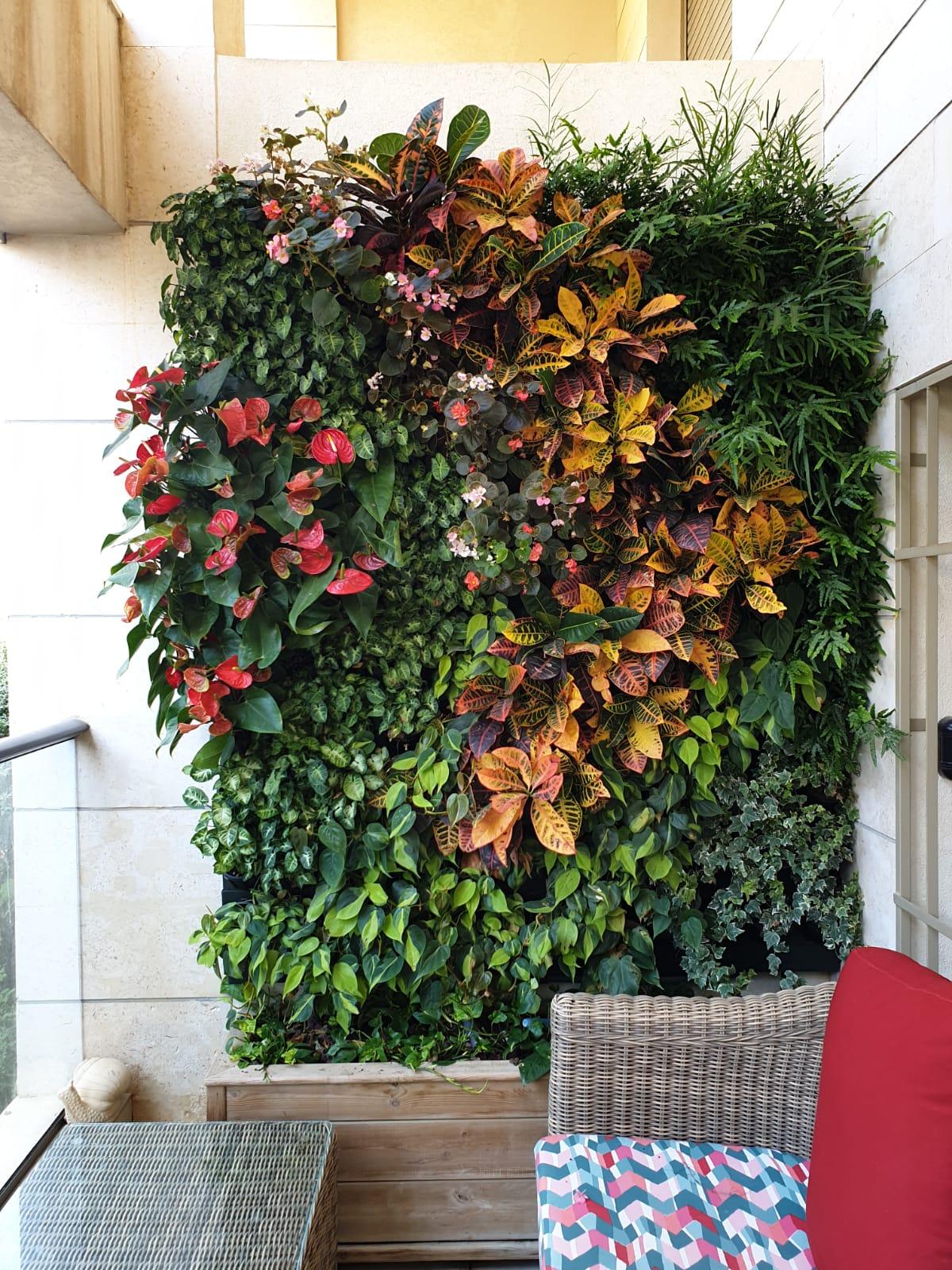 wall garden גנוי